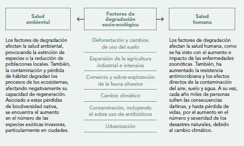 Figura 2. Distintos factores socio-ecológicos generan los actuales cambios globales que degradan la salud humana y la salud ambiental.